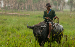 man riding a water buffalo