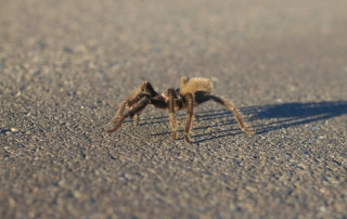 Phobias and the Great Commission