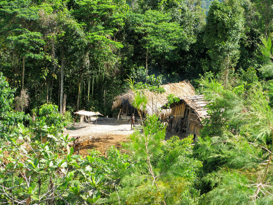 Tribal house in the jungle