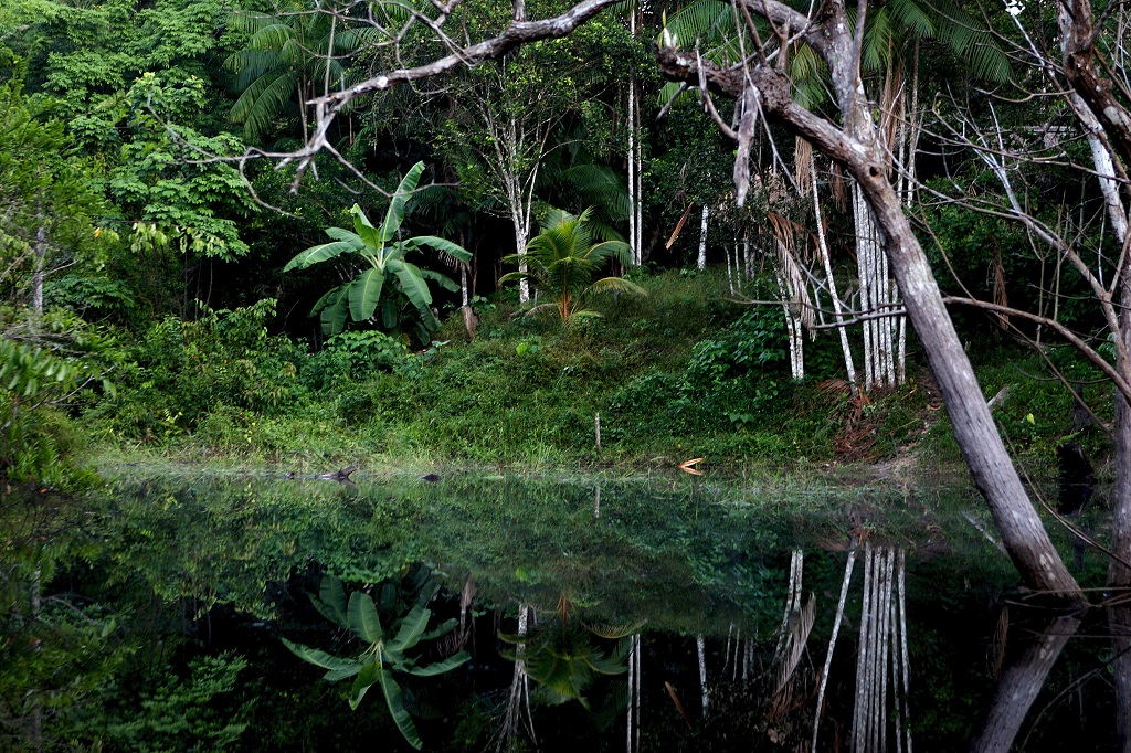 reflection of jungle in calm water