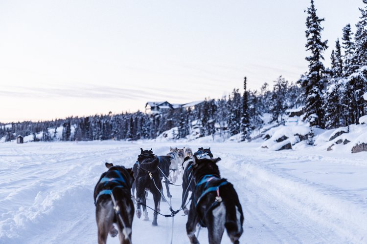 dogs pulling a sled together