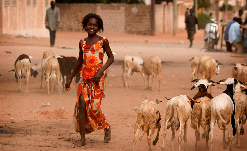 West African girl walking in dusty village with goats